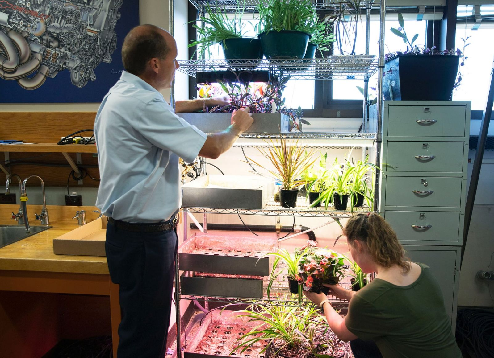 Bill Hutzel, professor of mechanical engineering technology, and Danielle LeClerc, an undergraduate student who works on the Biowall team, are inspecting the plants used for the project. (Purdue Research Foundation image/Hope Sale)